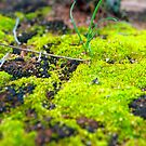 'Green Moss' by Luke Weinel