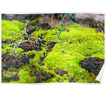 'Green Moss' Poster