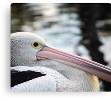'Pelican' Canvas Print
