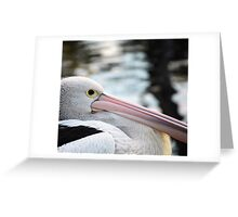 'Pelican' Greeting Card