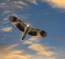 Hassling the Osprey by byronbackyard