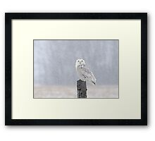 In Her Element / Snowy Owl In A Snow Storm Framed Print