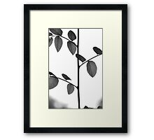 Stems And Leaves Framed Print