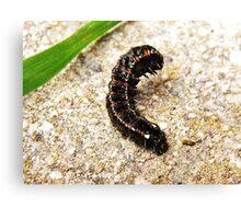 Caterpillar Defence Canvas Print