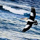 A Pelican Solo - Descent by clydeessex