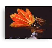 Fall Leaf in Water Canvas Print