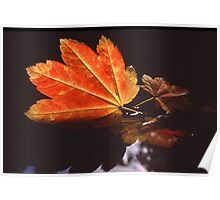 Fall Leaf in Water Poster