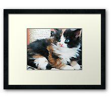 Kitten 2 Framed Print