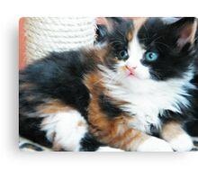 Kitten 2 Canvas Print