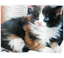 Kitten 2 Poster