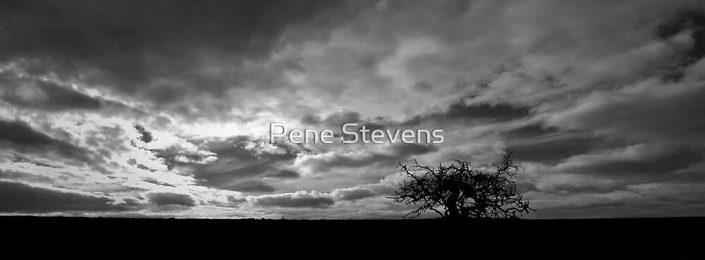 Silhouette by Pene Stevens
