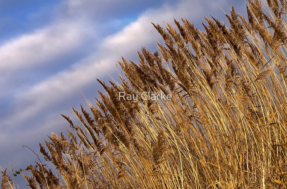 Winter Grass by Ray Clarke
