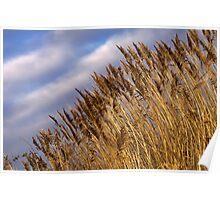 Winter Grass Poster
