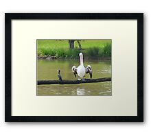 See , easy ,that's what it's all about!  Framed Print