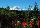 Wildflowers & Mt. Rainier by Tori Snow