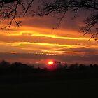 Evening Sunset Landscape by dragoncity