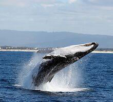 Breaching Whale by Blake  Hyland