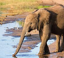 Elephant On the Riverbank by Scott Carr