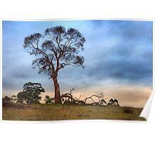 Fallen Branches Poster