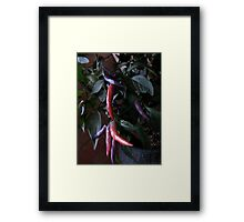 Pink, Purple Peppers Pizazz Framed Print