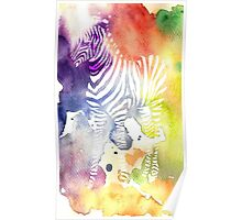 White Zebra Poster