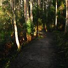Path to Port Arthur  - Tasman Peninsula, Tasmania, Australia by pocketdelight