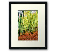 Autumn in a beech forest Framed Print