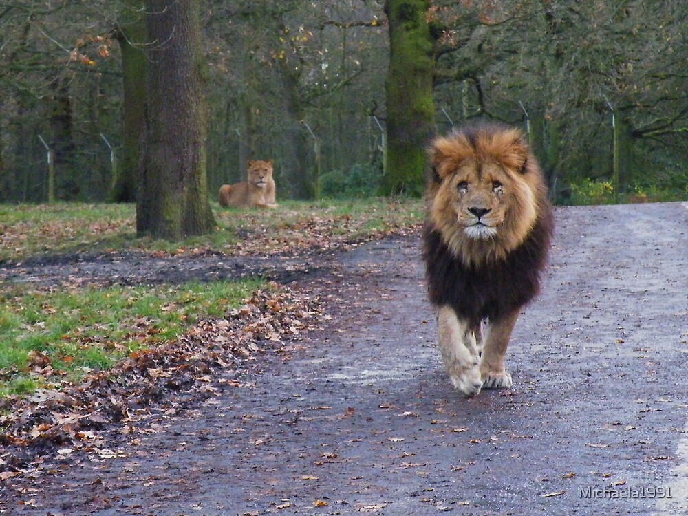King Of The Pride - Knowsely Safari Park, Liverpool, UK by Michaela1991