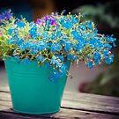 Flower Bucket by Karen Duffy