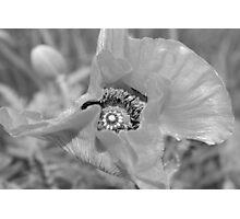 Poppy Center Photographic Print
