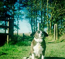 Tara the dog by Ben Storey