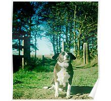 Tara the dog Poster