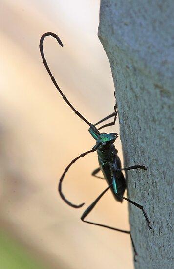 Emerald Longhorn beetle by Etwin
