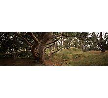 Kroller Mueller Forest Photographic Print