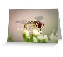 Macro of insect on a Parley Flower Greeting Card