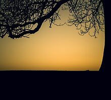 Sunset silhouette by Chris Fletcher