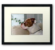 I wanna go out to play! Framed Print
