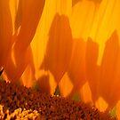 sunshadow by yvesrossetti