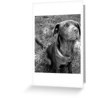 The Chocolate Lab Puppy Greeting Card
