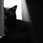In the Blinds by dolphinkist