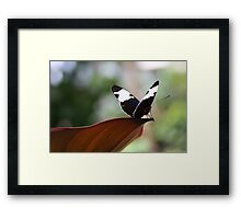 Out on the Edge Framed Print