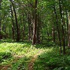 Woods of Fern by vigor