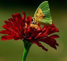 The Fly By by Brenda Burnett