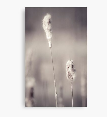 tranquility | 03 Canvas Print