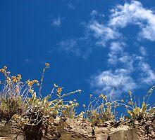 Flowering through the cracks, Dubrovnik by MikeyLee