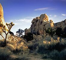Jumbo Rocks, So. California High Country by wolftinz