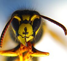 Thawing Wasp - A wasp I froze for the sake of art by SturgeonPhoto
