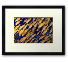 Blue Striped Snappers Framed Print