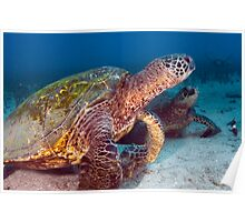 Turtle Town Poster