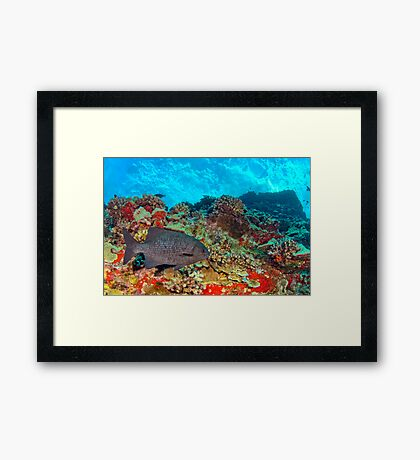 Rudder Fish Framed Print
